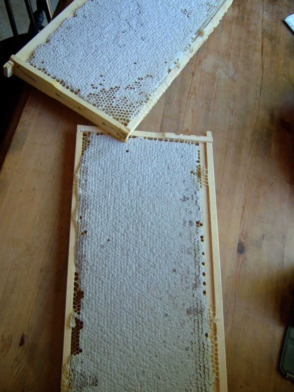 Capped honey frames