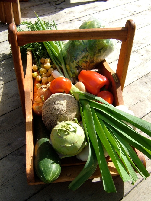 Basket of garden vegetables