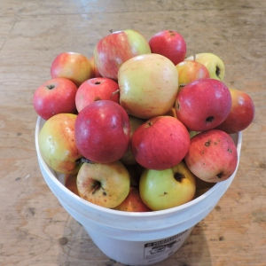 bucket of apples