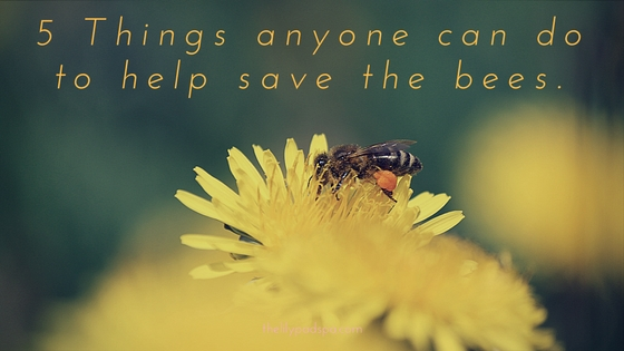 5 Ways to help save the bees.