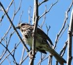 Nesting birds in spring